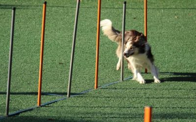 Does Pet Insurance Cover Dog Training